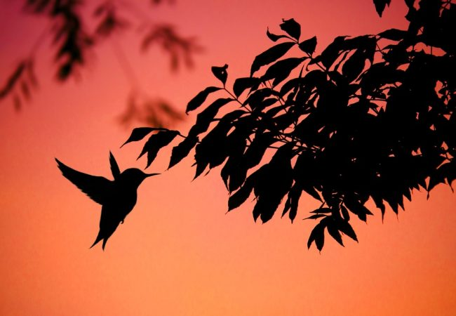 Birds that Fly at Dusk: The Life and Social Behaviors of Nocturnal Birds