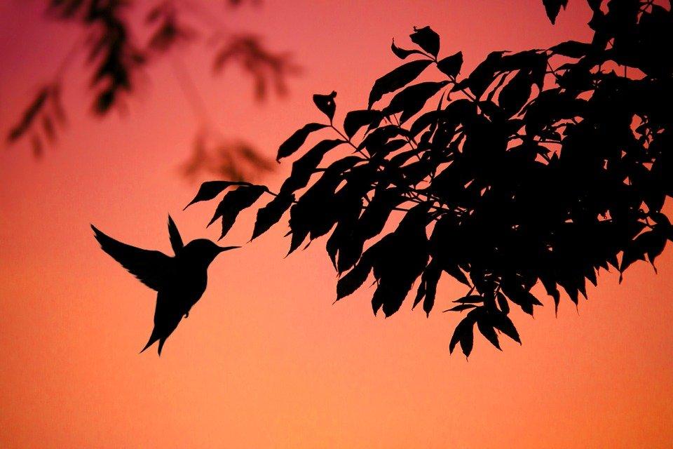 hummingbird on orange background