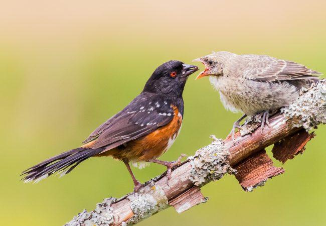 Do Birds Feed at Night: Diurnal Birds Vs. Nocturnal Birds