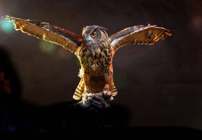 Nocturnal Birds List – A List Of Must-See Birds!
