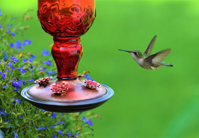 Best Hummingbird Feeders for Backyard Birding: 2020 Buyer's Guide & Reviews