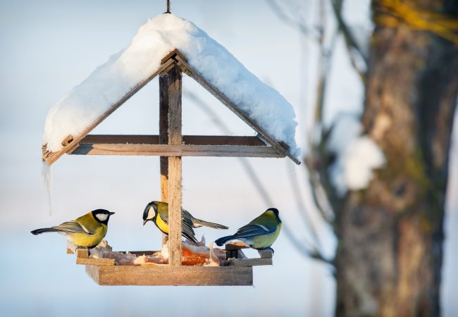 How to Hang a Bird Feeder