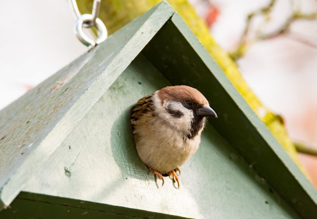 How to Keep Sparrows Out of a Bird House