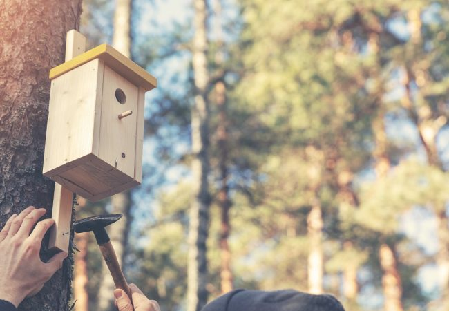 Best Bird Houses in 2020: Buyers Guide with Top Product Recommendations