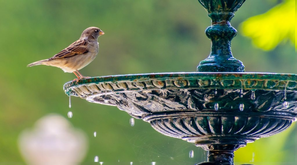 sparrow standing