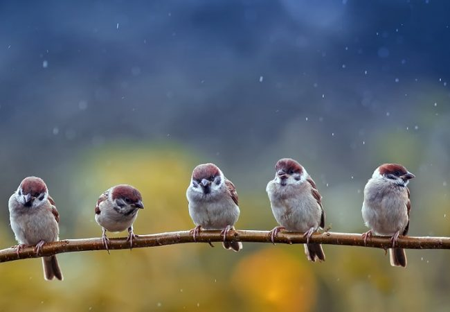 8 Ways to Help Birds in Bad Weather