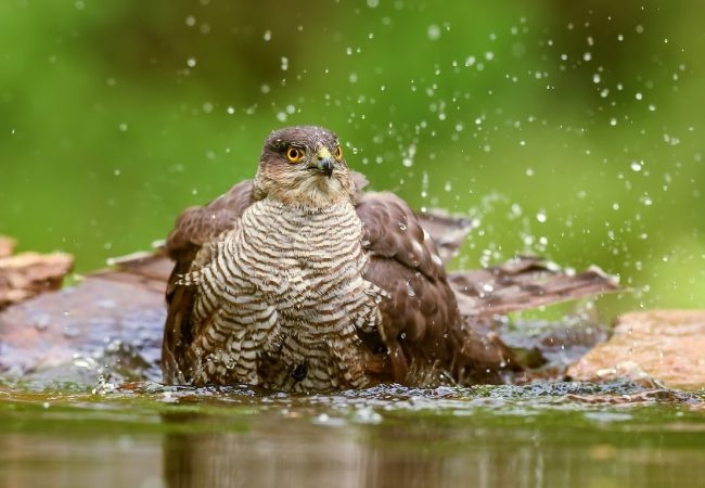 The Importance of Water for Birds