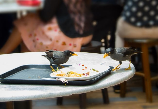 Food Scraps that Birds can Eat