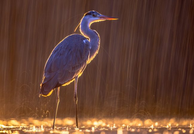 Where Do Birds Go When It Rains