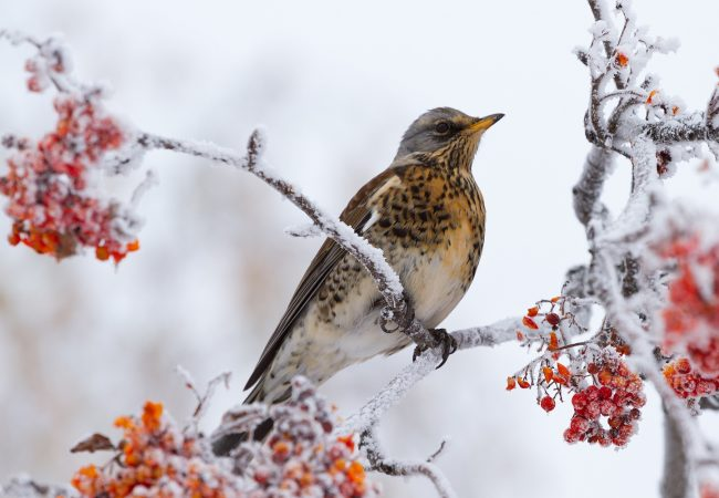 Where Do Migrating Birds Spend Their Winter
